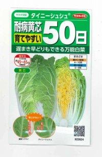 [白菜] タイニーシュシュ 小袋 サカタのタネ 実咲