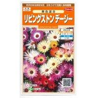[花種/小袋] リビングストンデージー 美色混合 0.2ml サカタのタネ
