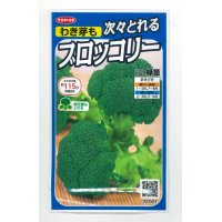 [ブロッコリー] 緑笛 サカタ交配 実咲