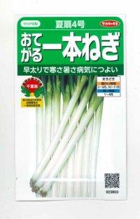 [ねぎ] 夏扇4号 3ml 実咲 貴種(コートしてません) サカタ交配