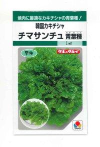 [レタス] チマサンチュ 青葉種 20ml タキイ種苗