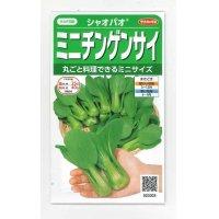 [中国野菜] シャオパオ(ミニチンゲンサイ) 3ml 実咲 サカタ交配
