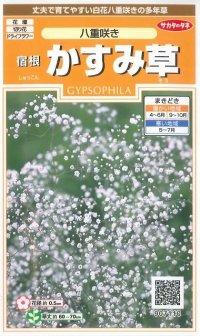 [花種/小袋] 宿根 かすみ草 八重咲き 小袋  サカタのタネ