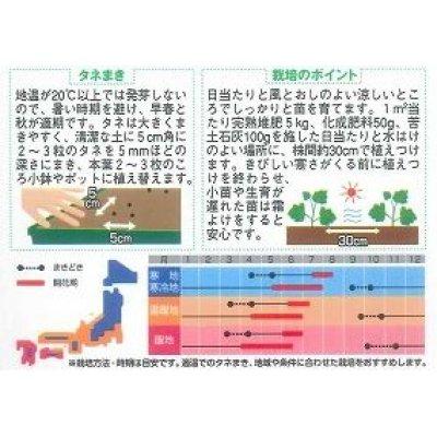 画像2: [花種/小袋] デルフィニューム パシフィックジャイアント 小袋 サカタのタネ