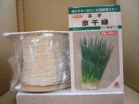 シーダー種子 ネギ 京千緑 1粒×1cm間隔×200m