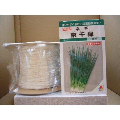 画像1: シーダー種子 ネギ 京千緑 1粒×1cm間隔×200m