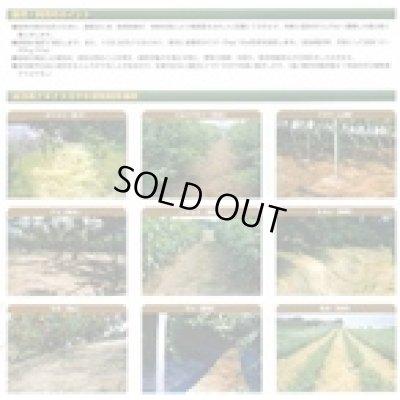 画像3: [緑肥] オオナギナタガヤ 1kg 雪印種苗株式会社