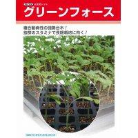 [台木/トマト用] 送料無料! グリーンフォース 生種 1000粒 タキイ交配