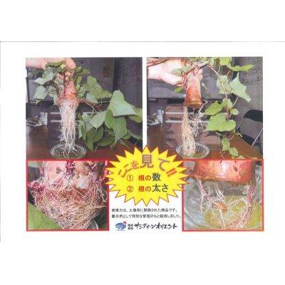 画像4: 肥料 発根力 1L 株式会社サングリーンオリエント