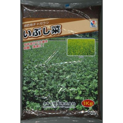 画像1: [緑肥] チャガラシ いぶし菜 1kg タキイ種苗(株)