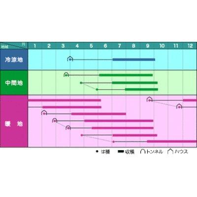 画像2: [オクラ] ブルースカイZ 1L   みかど協和(株)