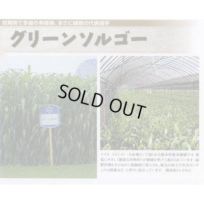 画像3: [緑肥] グリーンソルゴー 1kg 雪印種苗株式会社