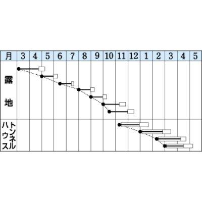 画像2: [小松菜] 送料無料! 夏楽天 1L タキイ交配
