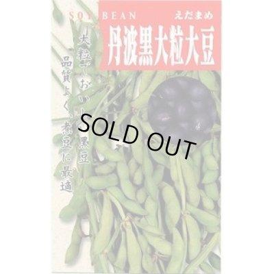画像1: [枝豆] 丹波の黒大粒大豆 50ml タカヤマシード