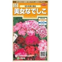 [花種/小袋] 美女なでしこ 切り花用混合  小袋 サカタのタネ