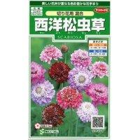 [花種/小袋] 西洋松虫草 切り花用混合 小袋  サカタのタネ