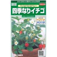 [花種/小袋] ワイルドストロベリー (四季なりイチゴ)  小袋 サカタのタネ