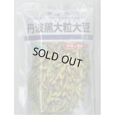 画像1: [枝豆] 丹波黒大粒大豆 1dl タキイ種苗