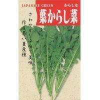 [葉物] 葉からし菜 20ml