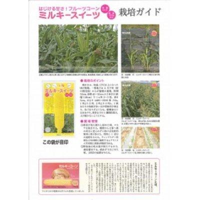 画像3: [とうもろこし] ミルキースイーツ 2000粒 トキタ種苗