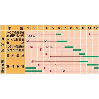 画像2: [ねぎ] 元蔵 コート5千粒 武蔵野種苗園