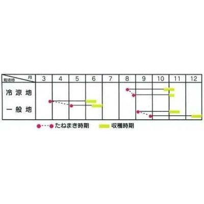 画像2: [葉物] 野沢菜 8ml タキイ種苗(株)