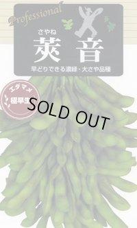 [枝豆] 莢音 70ml 雪印種苗