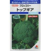 [ブロッコリー] トップギア 1.3ml 貴種(コートしてません) タキイ交配