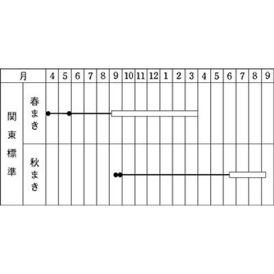 画像2: [牛蒡] 柳川理想 2dl タキイ種苗
