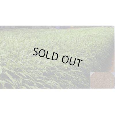 画像4: 緑肥 ソイルクリーン 1kg 雪印種苗株式会社