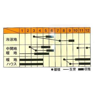 画像2: [えんどう] フルーツ実豌豆 あま実ちゃん 1dl 松永育成