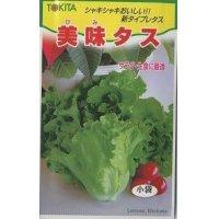 [レタス] 美味タス 2ml トキタ種苗