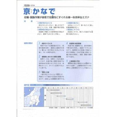 画像2: [シーダー種子] みずな 京かなで 1粒×5cm間隔