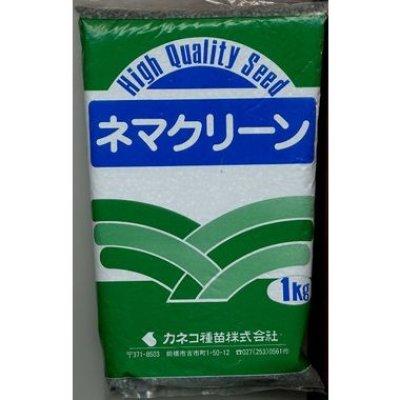画像1: [緑肥] ネマクリーン(マメ科)1kg カネコ種苗株式会社