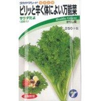 [葉物] からし菜 サラダだよ  ピリッと辛く体によい万能菜 5ml タカヤマシード