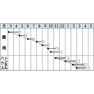 画像2: [小松菜] 送料無料! 楽天 1L タキイ交配