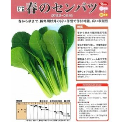 画像2: [シーダー種子] 小松菜 春のセンバツ 1粒×5cm間隔
