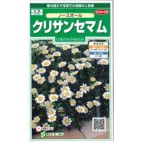 [花種/小袋] クリサンセマム ノースポール 小袋  サカタのタネ