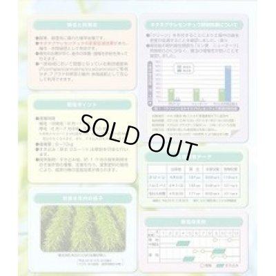 画像3: [緑肥] ライ麦 クリーン 1kg カネコ種苗
