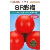 送料無料  トマト種   大玉トマト SR彩福  1000粒 カネコ交配
