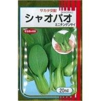 [中国野菜] シャオパオ(ミニチンゲンサイ) ペレット5000粒 サカタ交配