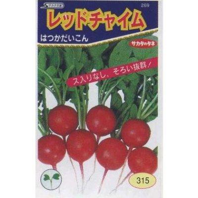 画像2: [シーダー種子] はつかだいこん レッドチャイム 1粒×3cm間隔