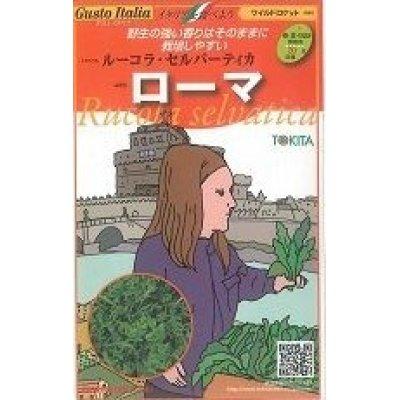 画像1: [イタリア野菜]  ローマ ルーコラ・セルバーティカ 500粒 トキタ種苗
