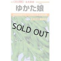 [枝豆] ゆかた娘 100粒 カネコ種苗