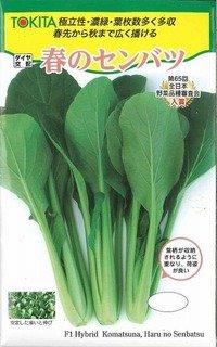 [小松菜] 春のセンバツ 10ml トキタ種苗