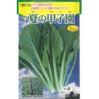 送料無料  小松菜 夏の甲子園  トキタ種苗