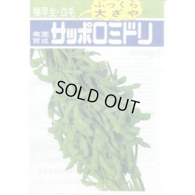 画像2: [枝豆] サッポロミドリ 1L 雪印種苗