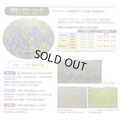 画像5: [緑肥] ヘアリーベッチ 寒太郎 (サバン) 1kg 雪印種苗株式会社