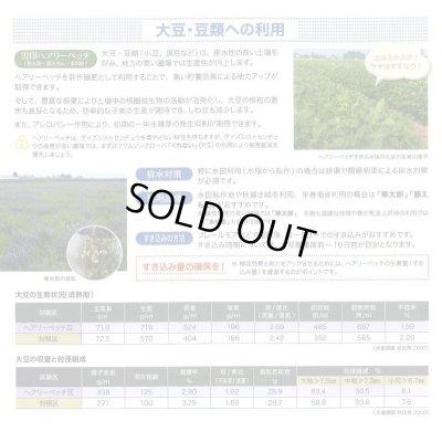 画像4: [緑肥] ヘアリーベッチ 寒太郎 (サバン) 1kg 雪印種苗株式会社