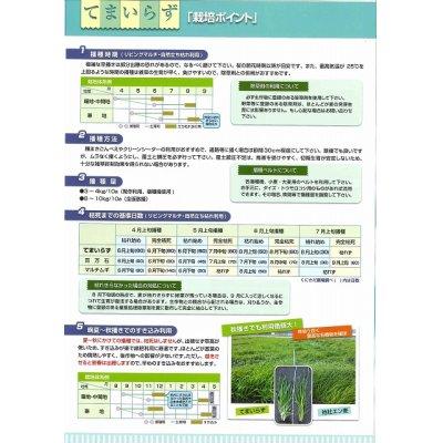 画像2: [緑肥] てまいらず(イネ科) 1kg カネコ種苗株式会社